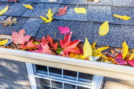 stock photo of shingles  - Colorful fall leaves in the gutter on a roof - JPG