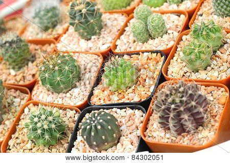 Close Up Of The Cactus