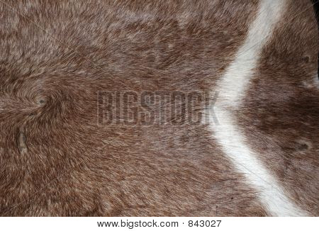 Waterbuck hide