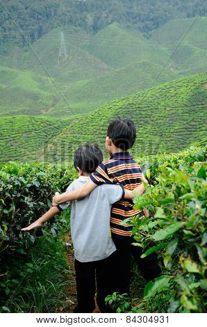 Two little boy playing in the tea plantation