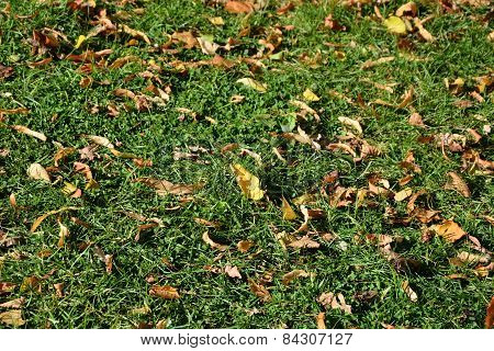 Yellow Leaves On Green Grass As A Background