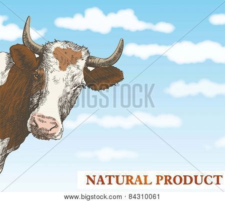 cows head on a blue sky background