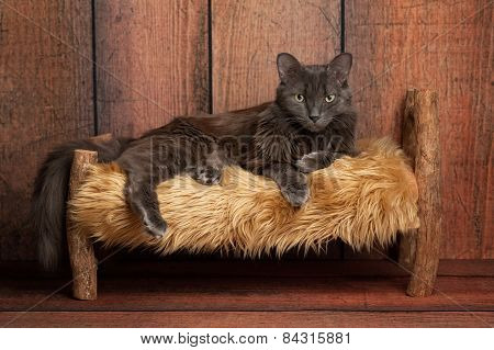Nebelung Cat On A Little Wooden Bed