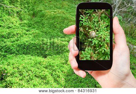Tourist Taking Photo Of Snail On Green Algae
