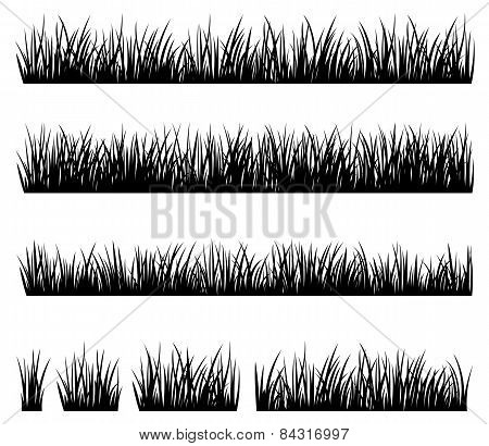 Set Of Silhouette Of Grass Isolated On White Background