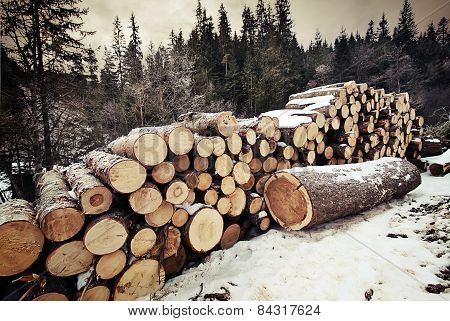 Pile Of Logs In The Winter Forest