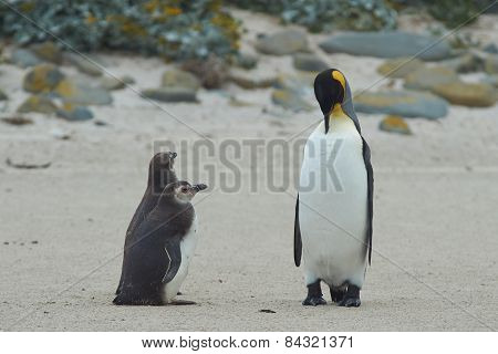 When I grow up I want to be a King Penguin