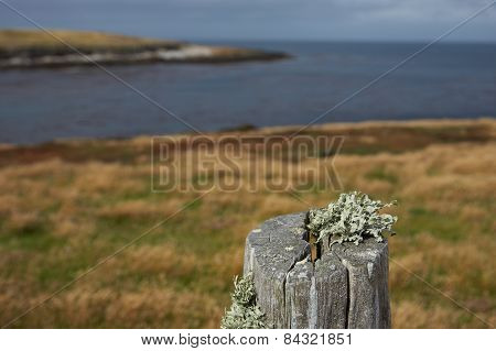 Fence Post on Bleaker Island