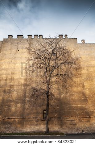 Old Leafless Tree On Old Yellow Wall Background