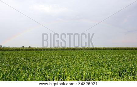 Rainbow Over Vercelli Countryside