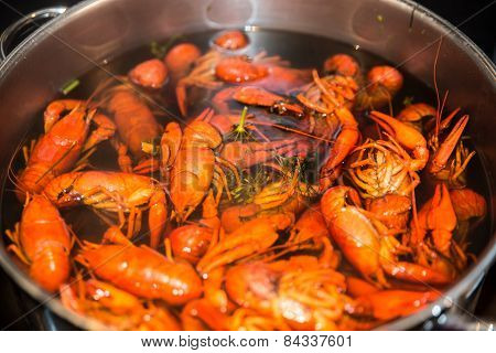 Freshly Cooked Crayfish With Dill And Salt
