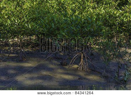 Mangrove Swamp Land