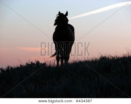 lone horse against sunset