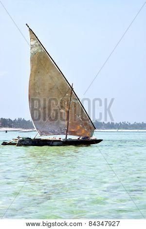 Beach   In Zanzibar Seaweed