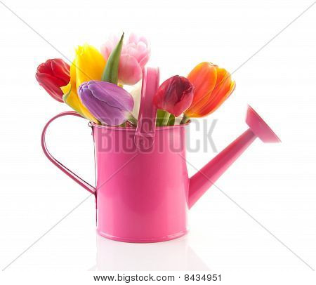 Pink Watering Can With Colorful Tulips