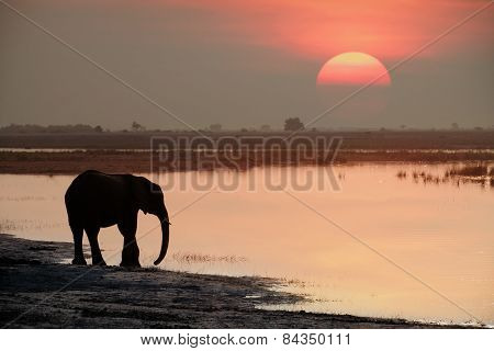 An elephant drinks as the sun sets over the Chobe River