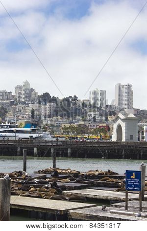 Sea Lions On Pier 39, With San Francisco Cityscape