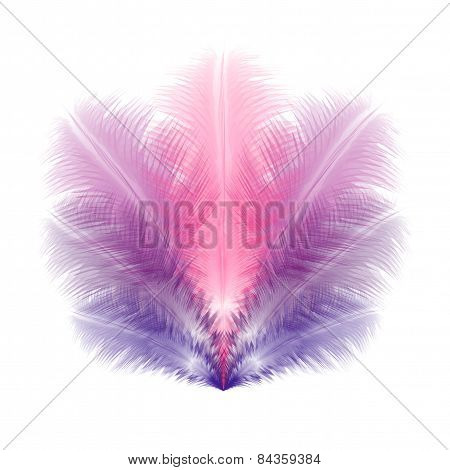 Group Of Violet And Pink Soft Realistic Feathers. Eps10