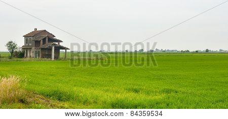 Countryside Near Vercelli