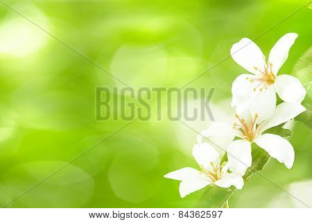 Beautiful Tung Flowers
