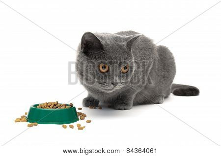 Cat Eats Dry Food From The Green Bowl On A White Background
