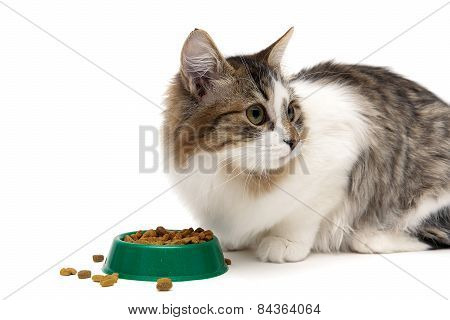 Fluffy Kitten Eats Food From The Green Bowl On A White Background