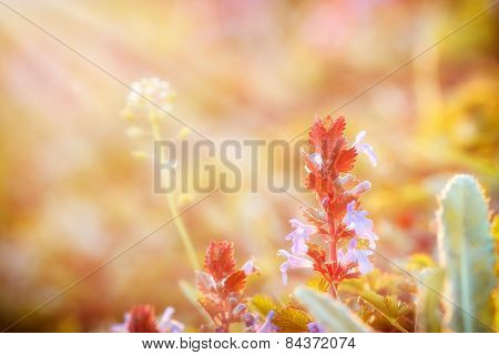 Meadow flowers bathed in sunlight