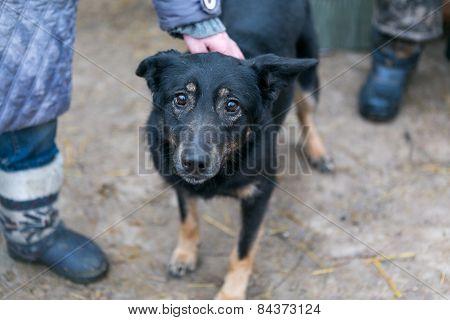 Dog Shelter For Homeless Animals