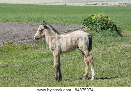 Free Colt In The Countryside