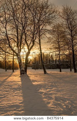 Rising Sun Shining Through A Birch Tree In A Winter Park