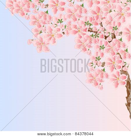 Cherry sakura blossoms Spring  place for text vector