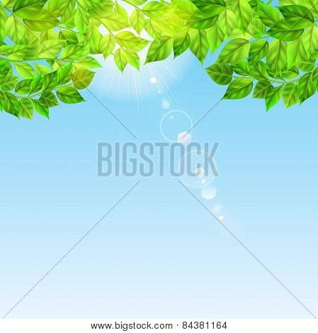 Blue Sky With Sun And Green Leaves