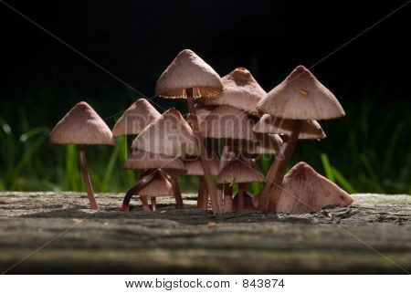 Backlighted Mushrooms