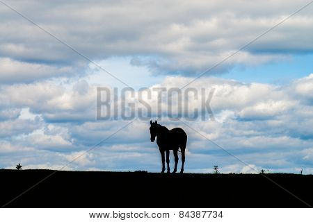 Sillhouette Of A Horse