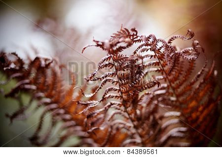 Autumn Dried-up Fern Leaves.
