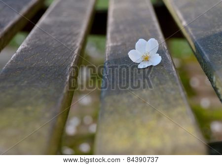 Cherry Flower On A Mossy Bench With Wooden Texture
