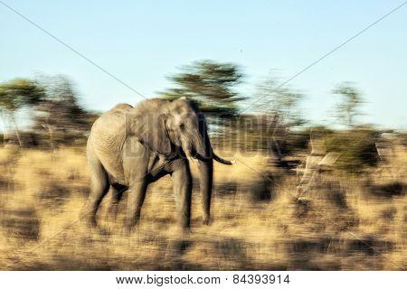 A running elephant