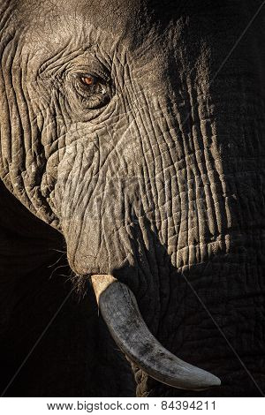 Close up of an elephants face in Botswana
