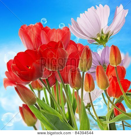 Beautiful  Fresh Red Tulips On Abstract Spring Nature Background