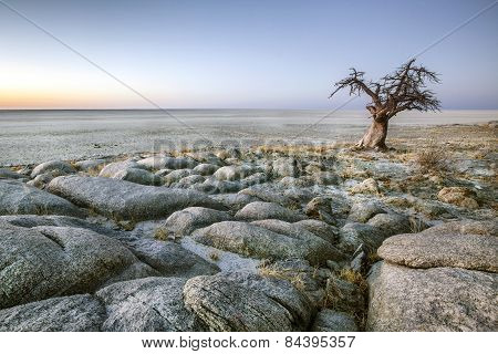 A lone baobab tree on the edge of a large salt pan