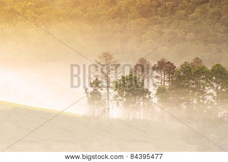 Abstract blurry forest background