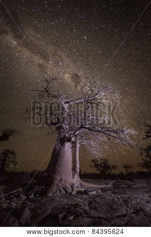 Baobab tree under a stary sky in Botswana