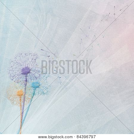 dandelions on tulle background