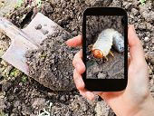 stock photo of larvae  - garden concept  - JPG