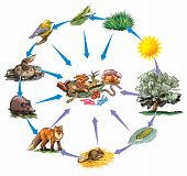 image of omnivore  - Vector illustration of some basic food chain - JPG
