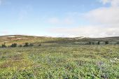 pic of arctic landscape  - Beautiful tundra landscape in northern Norway at summer - JPG