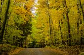 pic of canopy  - a dirt road rises under a canopy of autumn leaves at a campsite in potawatomi state park wisconsin - JPG