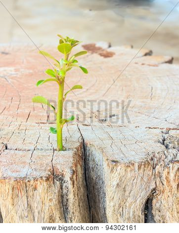 New Life Seedlings On A Tree Stump