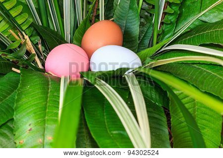 Colorful Easter Eggs In Green Grass Nest.