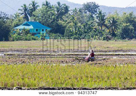 Asia Farmer Using Tiller Tractor In Rice Field
